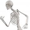 猫背で老いが加速する! 胸を張れ! 背骨を伸ばせ! 姿勢を正せば人生が激変する