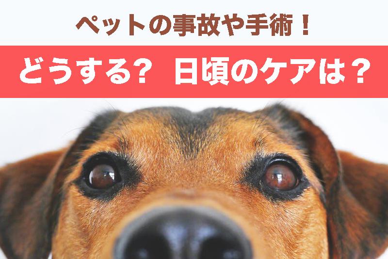【ペットの献血・輸血】事故や手術!どうする?【日頃の健康ケアが大事】