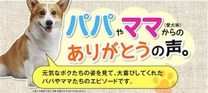 「犬康食・ワン」は15年間選ばれ続けたロングセラーです。そして、新たに7万頭以上のワンちゃんに愛された「犬康食・ワン」のプレミアム版が誕生しました