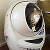 【猫の全自動トイレ】キャットロボットオープンエアーが絶賛される理由