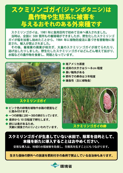 スクミリンゴガイ「環境省」【ジャンボタニシが大量発生】野生化した外来種が稲を食い荒らす!