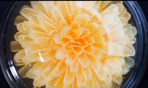 【ストローで花ゼリーを作る】意外に簡単? 難しい? 挑戦してみて! | 感心した動画紹介002