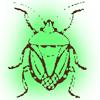 【カメムシ完全撃退】ハッカ油は超万能!自作スプレーで害虫被害ゼロ