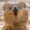 【世界一幸せな動物】クオッカ(Quokka)が日本にやってきた! 埼玉県こども動物自然公園で公開中