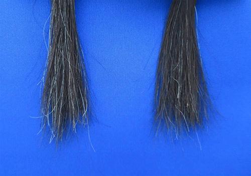 【髪の毛の「芯」メデュラが白さ影響】タンパク質摂取で白髪が軽減!?